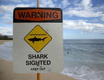 Sharks Attack !