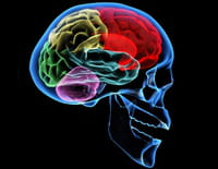 Le pouvoir nuit-il gravement au cerveau ?