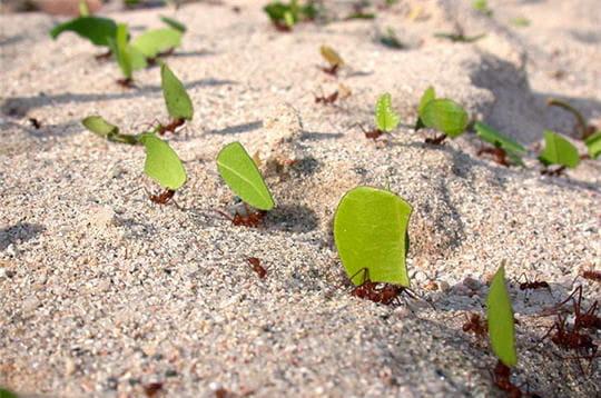 Nourriture fourmis