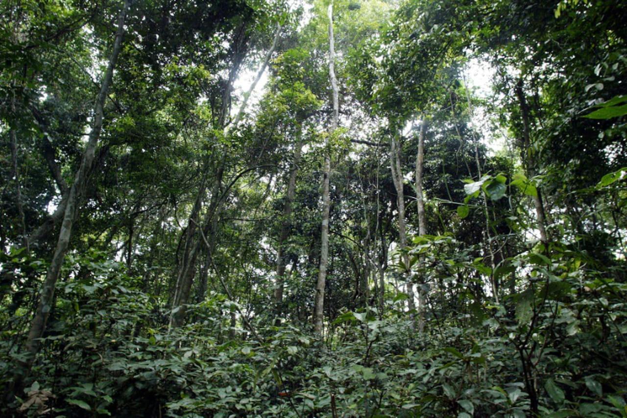 Forêts: Brésil, Chine, Indonésie et UE, zones clés pour rester sous 1,5°C