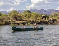 Instinct sauvage : Zambie : le secret des chauves-souris