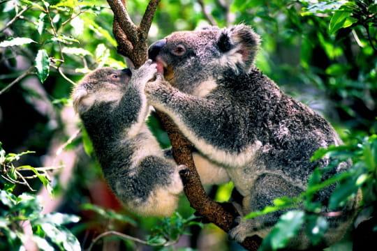 ces animaux sur leur arbre perch s. Black Bedroom Furniture Sets. Home Design Ideas