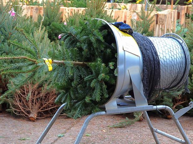 Comment choisir son sapin de Noël, le décorer et le conserver?