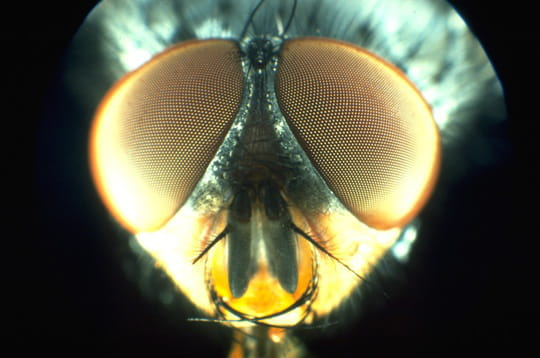 Sa majesté des mouches
