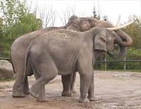 Au coeur du zoo : Heureuse naissance