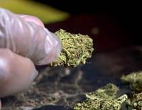 Inside : l'univers des drogues : La folie cannabis