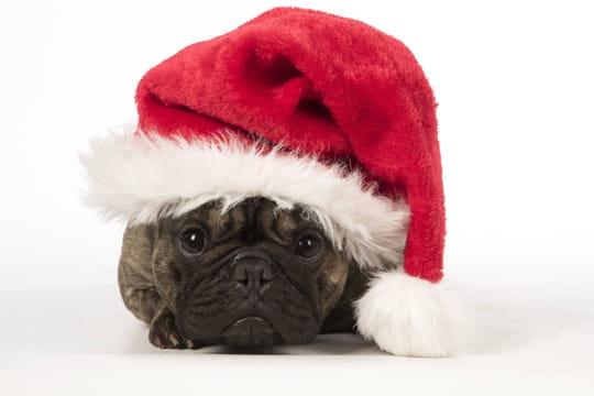 """Joyeuses fêtes: carte de voeux, SMS et textes humour.. dites """"joyeuses fêtes""""!"""