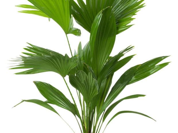 Plante d 39 int rieur entretien et arrosage des plantes for Arrosage plante interieur