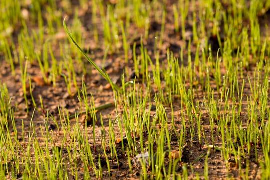 Gazon: comment bien le semer, la bonne technique
