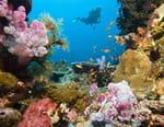 Dans la mer de corail