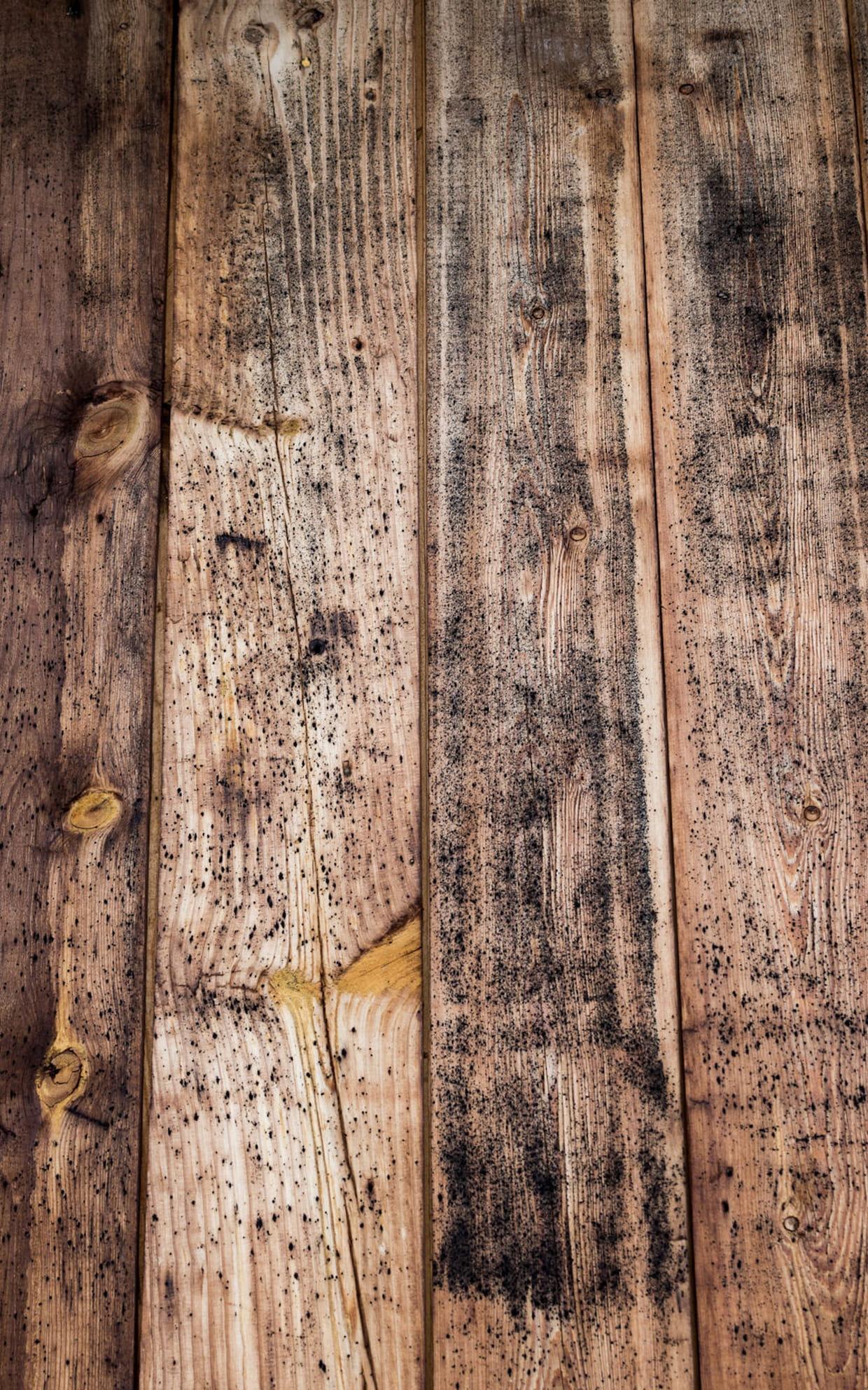 Enlever la moisissure sur du bois