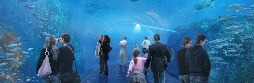 Nausicaá dévoile le plus grand aquarium d'Europe