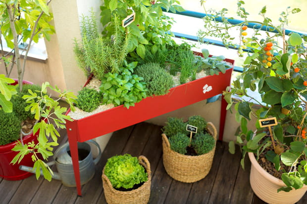 un mini potager sur le balcon. Black Bedroom Furniture Sets. Home Design Ideas