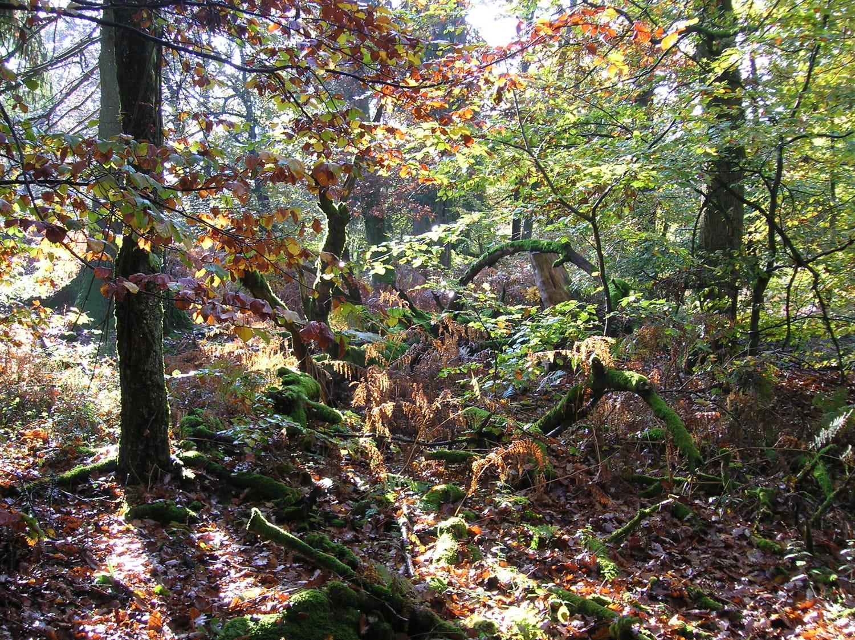 Parc naturel regional des Vosges du nord