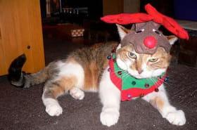 15 animaux qui subissent l'esprit de Noël