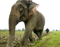 L'Inde sauvage : Au pays des Nagas