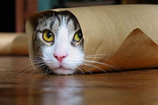 Top 10 des animaux qui jouent à cache-cache
