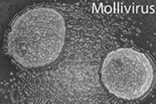 Virus géant en Sibérie : le mollivirus sibericum, un danger ?