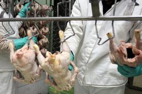 H7N9: que sait-on surlanouvelle grippe aviaire?