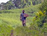 Martinique, sur la route de la Trace