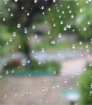 l'eau retourne au sol sous forme de pluie ou alors de neige.
