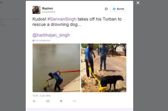 Un Indien sauve un chien de la noyade grâce à son turban