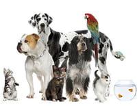 Les animaux de la 8 : Des animaux pas comme les autres…