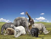 Missions Namibie : Rhinocéros et zèbres