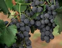 Voyage aux Amériques : Argentine : la région viticole de Mendoza