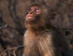 Le singe aveugle