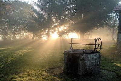 profitez de la brume au petit matin pour faire de jolies images en contre jour.