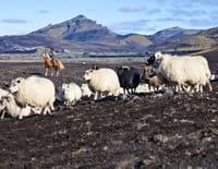 360°-GEO : Islande, des montagnes et des moutons