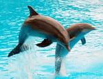 Dessine-moi un dauphin
