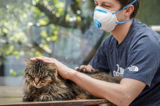 Animaux et coronavirus: les chats et chiens sont-ils une menace?