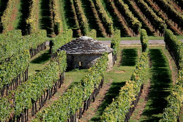 En Bourgogne, sur la Route des Grands crus