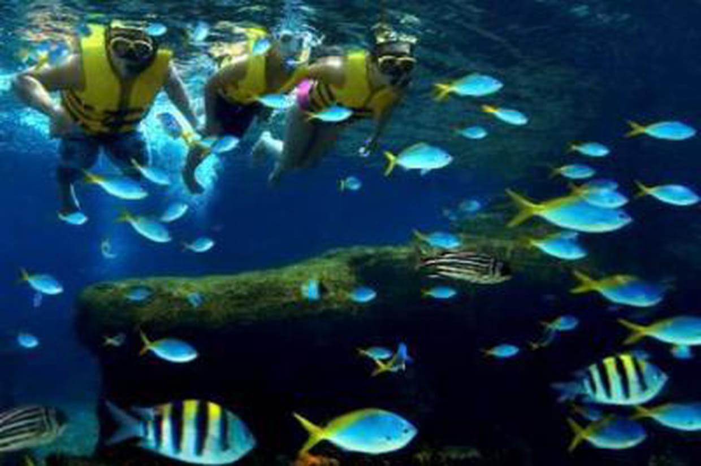 singapour le plus grand aquarium du monde ouvre ses portes