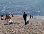 Plastique : risques et enjeux pour l'environnement