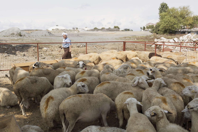 Aïd el Kébir 2021: des règles strictes dans les abattoirs, mais des indignations