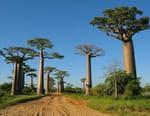 Passion Madagascar