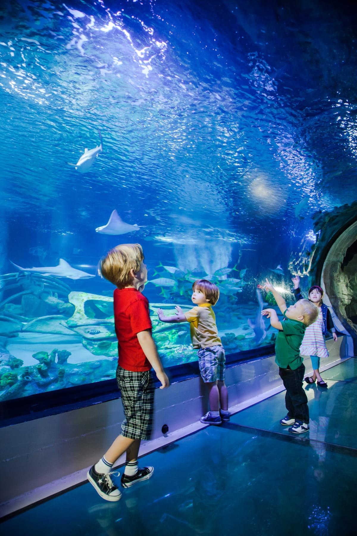 l 39 aquarium sea life val d 39 europe marne la vall e. Black Bedroom Furniture Sets. Home Design Ideas