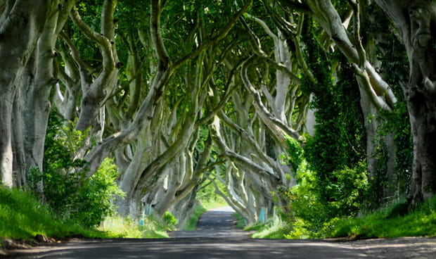 La Route Royale : Dark Hedges
