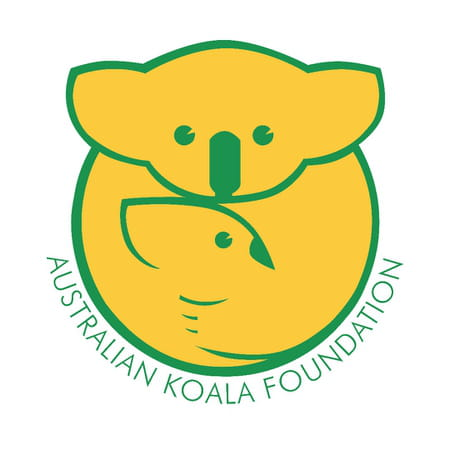 Foundation Australian Koala
