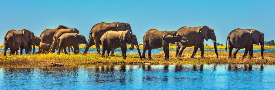 Les plus belles destinations pour un safari en Afrique