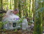 Sols contaminés : des plantes à la rescousse