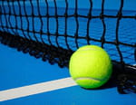 Tennis - Jo-Wilfried Tsonga / Aljaz Bedene