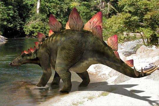 Le stégosaure