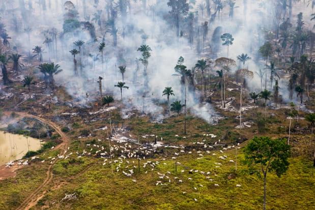 """Résultat de recherche d'images pour """"feu de forêt en amazonie"""""""