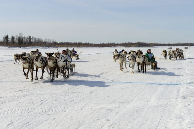 Assister à une course de rennes