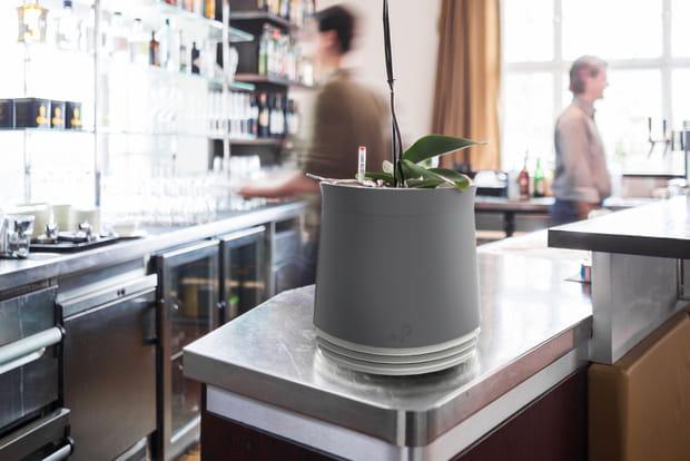 Un pot pour purifier l'intérieur