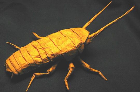 Insecte rampant